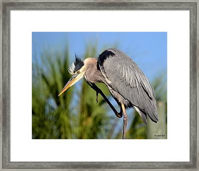 Cleaning Up Framed Print by Brenda Alcorn
