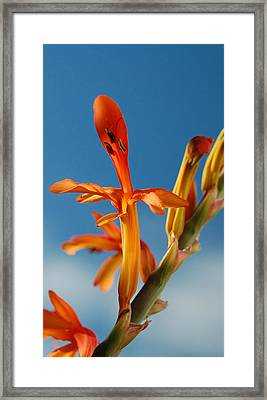 Clear Orange Framed Print by Jean Booth
