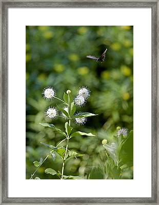 Cleared For Landing Framed Print by Charlie Osborn
