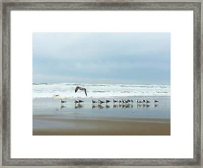 Cleared For Takeoff Framed Print by Donna Blackhall
