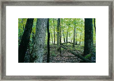 Clearing Gliimpsed 4 Framed Print by Tom Hefko
