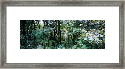Clearing Glimpsed 1 Framed Print by Tom Hefko