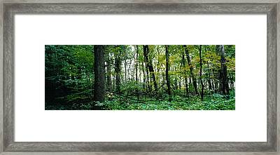 Clearing Glimpsed 2 Framed Print by Tom Hefko