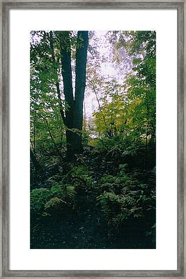 Clearing Glimpsed 3 Framed Print by Tom Hefko