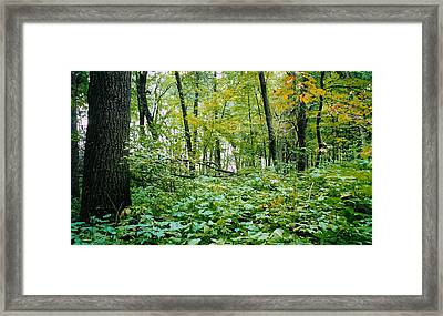Clearing Glimpsed 6 Framed Print by Tom Hefko