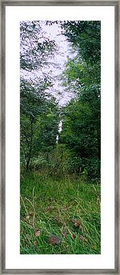 Clearing Glimpsed 7 Framed Print by Tom Hefko