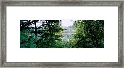 Clearing Glimpsed 8 Framed Print by Tom Hefko