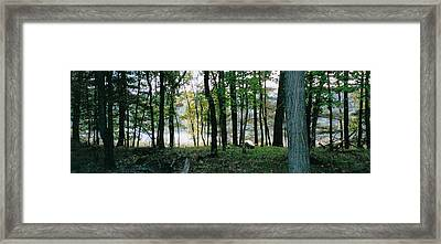 Clearing Glimpsed 9 Framed Print by Tom Hefko