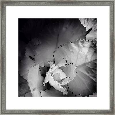 Clearly Bloomed Framed Print