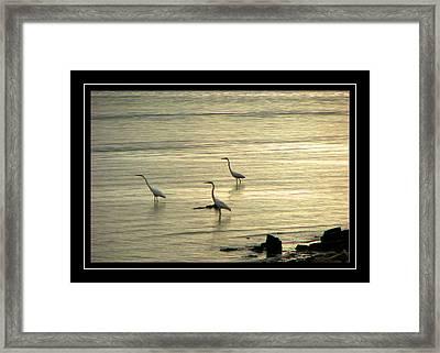 Clearwater Beach Framed Print by Carolyn Marshall