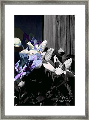 Clematis 2 Shades Of Grey Framed Print