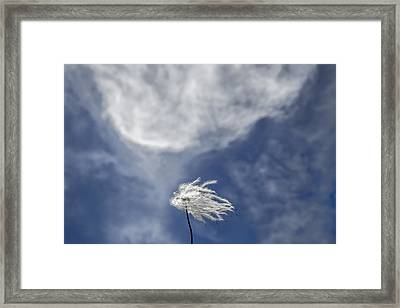 Clematis And Clouds Framed Print