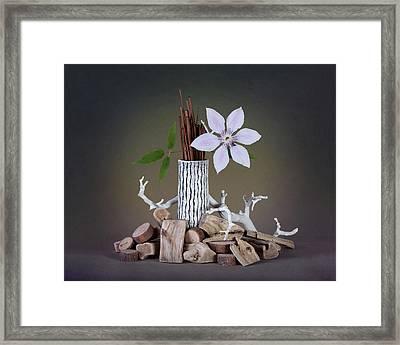 Clematis Blossom Framed Print