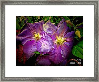 Clematis Azure Pearl Framed Print by Dorothy Berry-Lound