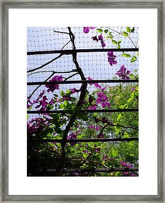 Clematis I Framed Print by Anna Villarreal Garbis