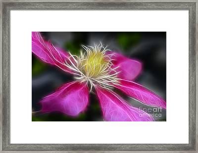 Clematis In Pink Framed Print by Deborah Benoit