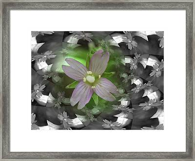 Framed Print featuring the photograph Clematis by Keith Elliott