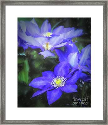 Clematis Framed Print by Linda Blair