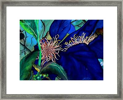 Clematis Regal In Purple And Blue Sold Framed Print