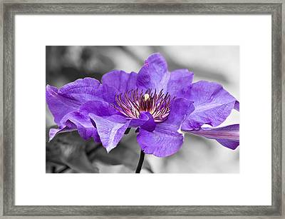 Clematis Framed Print by Scott Carruthers