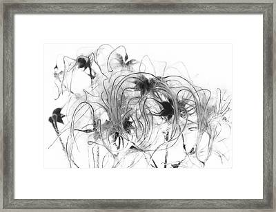 Clematis Seeds Framed Print