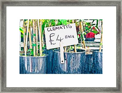 Clematis Framed Print by Tom Gowanlock