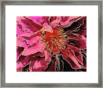 Clematis Up Close And Personal Framed Print