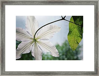 Framed Print featuring the photograph Clematis Vine And Leaves by Michelle Calkins