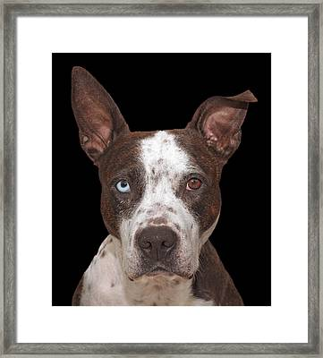 Cleo  Framed Print by Brian Cross