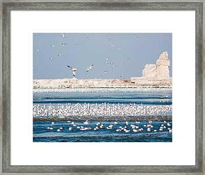 Cleveland Lighthouse In Ice  Framed Print