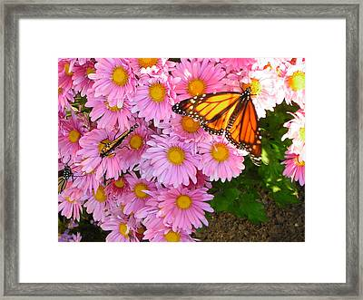 Cliff House Butterflies Framed Print by Heather Weikel