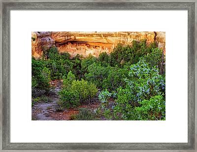 Cliff Palace At Mesa Verde National Park - Colorado Framed Print