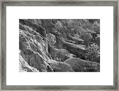 Cliff Pine Trees In Monochrome Framed Print