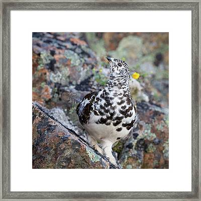 Cliffside Showoff Framed Print