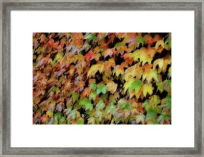 Climbing Color Framed Print by JAMART Photography