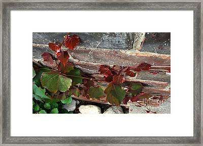 Climbing Ivy Framed Print