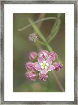 Framed Print featuring the photograph Climbing Milkweed by Alexander Kunz