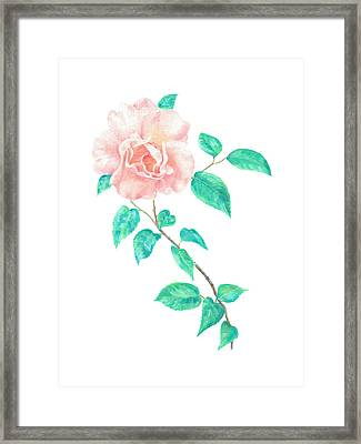 Framed Print featuring the painting Climbing Rose by Elizabeth Lock