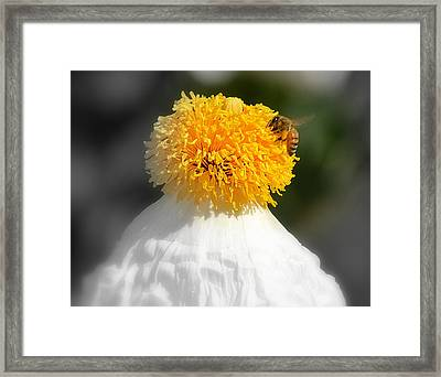 Climbing To The Top Framed Print