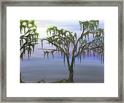 Climbing Trees Framed Print