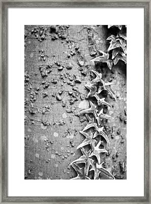 Climbing Vine Framed Print
