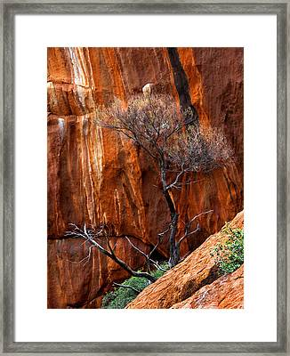 Clinging To Life Framed Print by Mike  Dawson