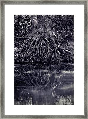 Clinging To The River Bank Framed Print