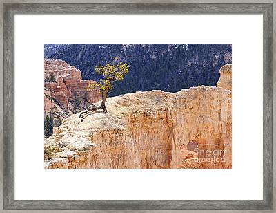 Clinging To The Top Of The Wall Framed Print