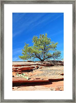 Clinging Tree In Zion National Park Framed Print