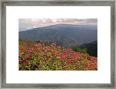 Clingman's Dome From Cliff Top Framed Print by Alan Lenk