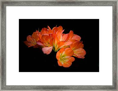 Clivia Flora Framed Print by Bruce Pritchett