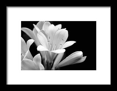 Clivia Framed Prints