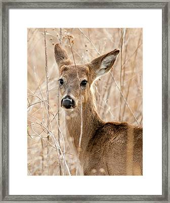 Close Encounter Framed Print by Ron  McGinnis