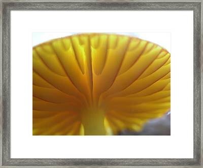 Framed Print featuring the painting Close Examination by Martha Ayotte